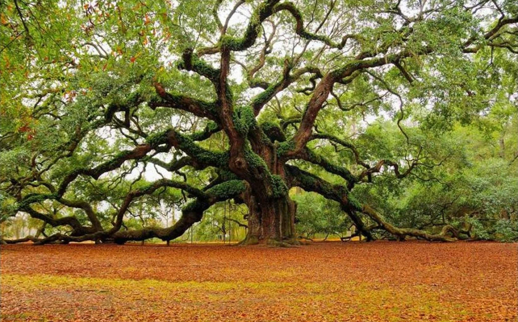 Italiano l albero della vita sparks of god - La legge dello specchio ...